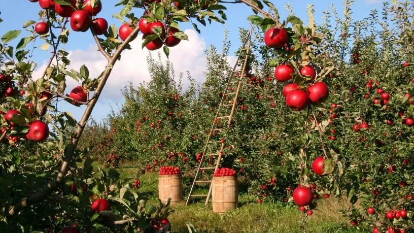 alberi_frutto_1